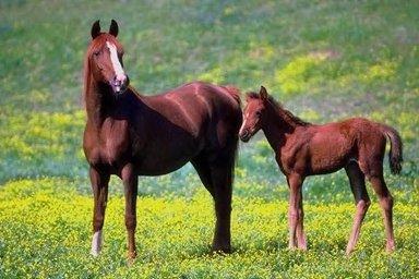 Pferde auf der Koppel 03